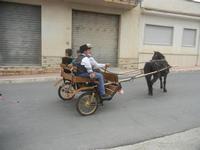SPERONE - sfilata di cavalli - festa San Giuseppe Lavoratore - 29 aprile 2012  - Custonaci (787 clic)