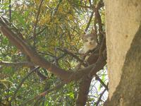 SIRIGNANO - Agriturismo - gattino su albero - 1 maggio 2012  - Monreale (598 clic)