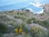 Cala Bianca - flora e mare - 14 aprile 2012  - Castellammare del golfo (581 clic)