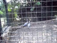 BIOPARCO di Sicilia - zoo - 17 luglio 2012 - Foto di Nicolò Pecoraro  - Villagrazia di carini (437 clic)