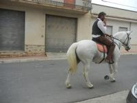 SPERONE - sfilata di cavalli - festa San Giuseppe Lavoratore - 29 aprile 2012  - Custonaci (793 clic)