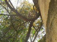 SIRIGNANO - Agriturismo - gattino su albero - 1 maggio 2012  - Monreale (697 clic)