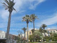 palme in Piazza Vittorio Emanuele - 3 giugno 2012  - Trapani (292 clic)