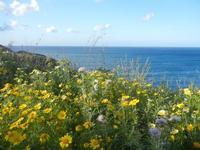 Cala Bianca - margherite sul mare - 14 aprile 2012  - Castellammare del golfo (490 clic)