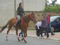 SPERONE - sfilata di cavalli - festa San Giuseppe Lavoratore - 29 aprile 2012  - Custonaci (777 clic)