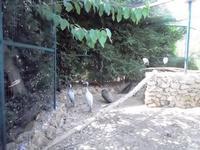 BIOPARCO di Sicilia - zoo - 17 luglio 2012 - Foto di Nicolò Pecoraro  - Villagrazia di carini (573 clic)