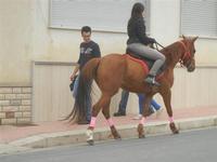 SPERONE - sfilata di cavalli - festa San Giuseppe Lavoratore - 29 aprile 2012  - Custonaci (877 clic)