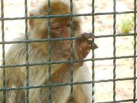 BIOPARCO di Sicilia - primati - 17 luglio 2012  - Villagrazia di carini (343 clic)
