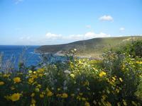 Cala Bianca - margherite e panorama - 14 aprile 2012  - Castellammare del golfo (484 clic)