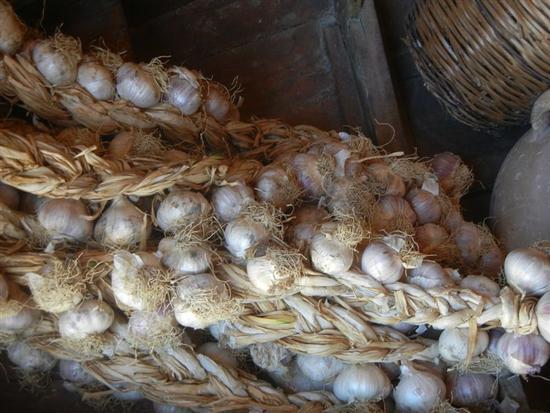 l'aglio di Nubia - NUBIA - inserita il 03-Mar-15