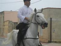 SPERONE - sfilata di cavalli - festa San Giuseppe Lavoratore - 29 aprile 2012  - Custonaci (1848 clic)