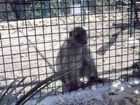BIOPARCO di Sicilia - primati - 17 luglio 2012 - Foto di Nicolò Pecoraro  - Villagrazia di carini (318 clic)
