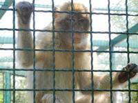 BIOPARCO di Sicilia - primati - 17 luglio 2012  - Villagrazia di carini (306 clic)