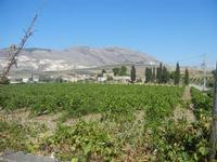 panorama agreste - vigneto e cave di marmo di Custonaci - 15 agosto 2012  - Buseto palizzolo (499 clic)