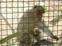 BIOPARCO di Sicilia - primati - 17 luglio 2012  - Villagrazia di carini (295 clic)