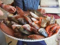 vassoio con pesci La Torre di Nubia - 3 giugno 2012  - Nubia (486 clic)