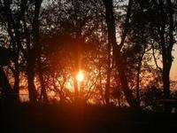 tramonto in pineta - 25 aprile 2012  - Erice (811 clic)