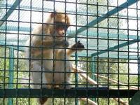BIOPARCO di Sicilia - primati - 17 luglio 2012  - Villagrazia di carini (307 clic)