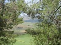 SIRIGNANO - Agriturismo - alberi e panorama agreste - 1 maggio 2012  - Monreale (857 clic)