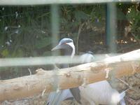 BIOPARCO di Sicilia - Zoo - 17 luglio 2012  - Villagrazia di carini (349 clic)