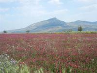 campo di sulla e Monte Bonifato - 1 maggio 2012  - Calatafimi segesta (556 clic)