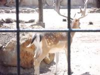 BIOPARCO di Sicilia - zoo - 17 luglio 2012 - Foto di Nicolò Pecoraro  - Villagrazia di carini (383 clic)