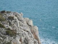 Riserva Naturale Orientata Capo Rama - 15 aprile 2012  - Terrasini (1217 clic)