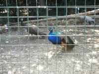 BIOPARCO di Sicilia - Zoo - 17 luglio 2012  - Villagrazia di carini (278 clic)