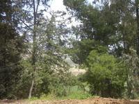 SIRIGNANO - Agriturismo - alberi - 1 maggio 2012  - Monreale (881 clic)
