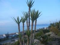 Zona Plaja - panorama est del Golfo di Castellammare - 1 giugno 2012  - Alcamo marina (329 clic)