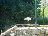 BIOPARCO di Sicilia - Zoo - 17 luglio 2012  - Villagrazia di carini (315 clic)