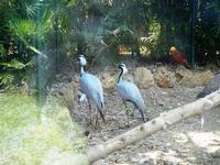 BIOPARCO di Sicilia - Zoo - 17 luglio 2012  - Villagrazia di carini (363 clic)