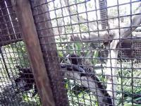 BIOPARCO di Sicilia - zoo - 17 luglio 2012 - Foto di Nicolò Pecoraro  - Villagrazia di carini (321 clic)
