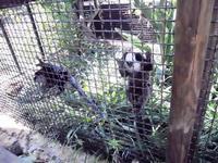BIOPARCO di Sicilia - zoo - 17 luglio 2012 - Foto di Nicolò Pecoraro  - Villagrazia di carini (309 clic)