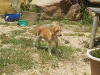 cagnolino - Baglio Arcudaci - 27 maggio 2012  - Bruca (308 clic)