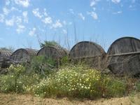 SIRIGNANO - Agriturismo - vecchie botti - 1 maggio 2012  - Monreale (672 clic)