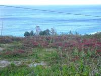prato con sulla sul mare - 14 aprile 2012  - Riserva dello zingaro (1204 clic)