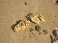 conchiglie fossili  - 10 settembre 2012  - Alcamo marina (298 clic)
