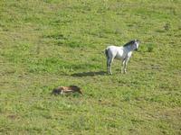 cavallo e puledro in libertà - Baglio Arcudaci - 1 aprile 2012  - Bruca (650 clic)
