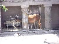 BIOPARCO di Sicilia - zoo - 17 luglio 2012 - Foto di Nicolò Pecoraro  - Villagrazia di carini (378 clic)