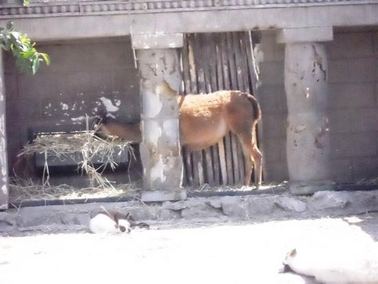 BIOPARCO di Sicilia - zoo - VILLAGRAZIA DI CARINI - inserita il 20-Apr-15