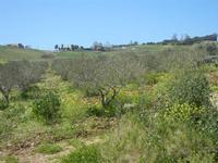 paesaggio rurale - Baglio Arcudaci - 1 aprile 2012  - Bruca (566 clic)