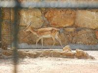 BIOPARCO di Sicilia - Zoo - 17 luglio 2012  - Villagrazia di carini (303 clic)