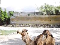 BIOPARCO di Sicilia - zoo - 17 luglio 2012 - Foto di Nicolò Pecoraro  - Villagrazia di carini (1902 clic)