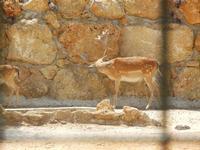 BIOPARCO di Sicilia - Zoo - 17 luglio 2012  - Villagrazia di carini (308 clic)