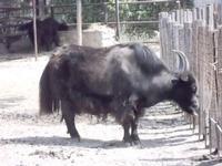 BIOPARCO di Sicilia - zoo - 17 luglio 2012 - Foto di Nicolò Pecoraro  - Villagrazia di carini (811 clic)