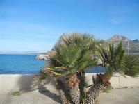palme nane e panorama sul mare dalla via Faro - 9 maggio 2012  - San vito lo capo (415 clic)