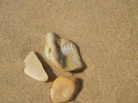 conchiglia fossile  - 10 settembre 2012  - Alcamo marina (240 clic)