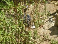 BIOPARCO di Sicilia - fattoria - 17 luglio 2012  - Villagrazia di carini (342 clic)