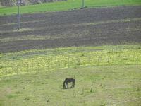 cavallo in libertà - Baglio Arcudaci - 1 aprile 2012  - Bruca (551 clic)